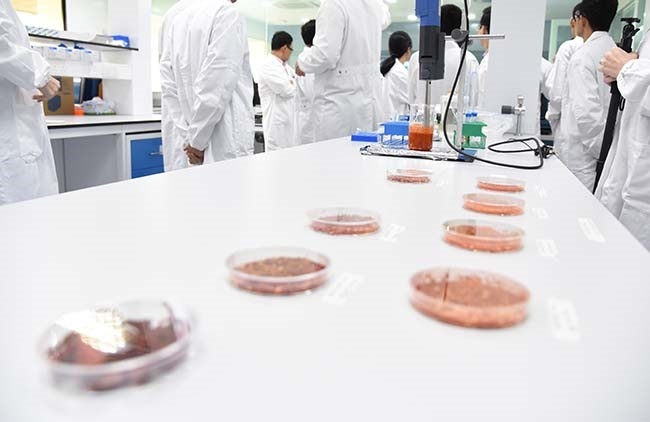 Cost, Technology and Regulations: Just How Viable are Cell-Based Meats?